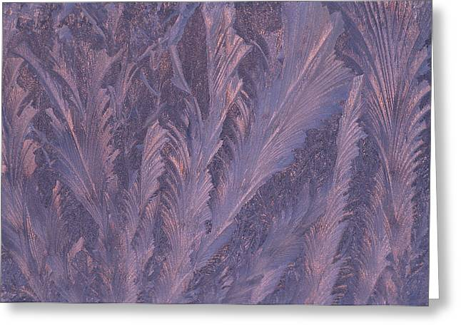 Usa, Michigan, Feathery Frost Patterns Greeting Card by Jaynes Gallery