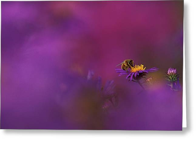 Usa, Michigan, Honeybee Pollinating New Greeting Card by Jaynes Gallery