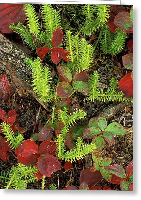 Usa, Michigan, Upper Peninsula, Club Greeting Card by Jaynes Gallery