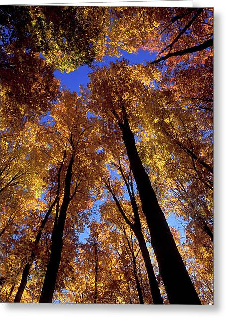 Usa, Michigan, Upper Peninsula, Looking Greeting Card by Jaynes Gallery