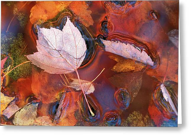 Usa, Northeast, Fall Leaves In Puddle Greeting Card by Jaynes Gallery