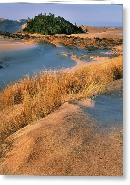 Usa, Oregon, Dunes National Recreation Greeting Card by Jaynes Gallery
