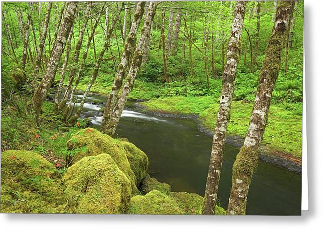 Usa, Oregon, Nestucca River Greeting Card by Jaynes Gallery