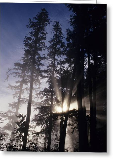State Parks In Oregon Greeting Cards - Usa, Oregon, Sunlight Filtering Through Greeting Card by Greg Vaughn