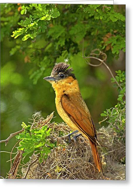 Usa, Texas, Santa Ana National Wildlife Greeting Card by Jaynes Gallery