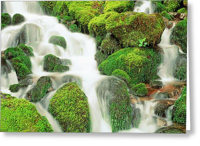 Moss-covered Greeting Cards - Usa, Washington, Olympic National Park Greeting Card by Panoramic Images