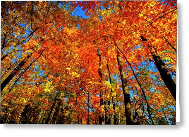 Usa, West Lafayette, Indiana, Trees Greeting Card by Rona Schwarz