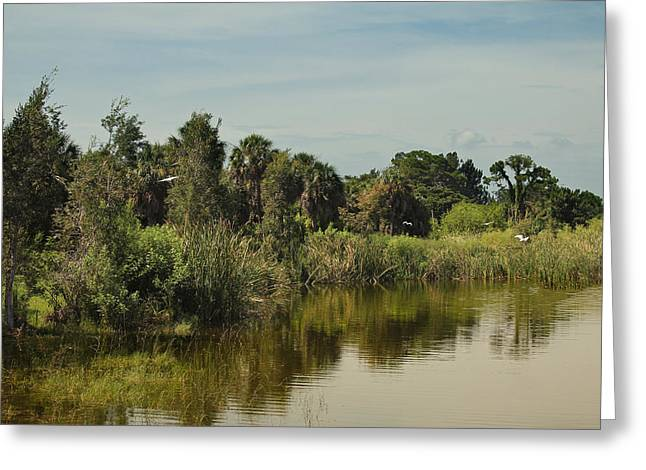 Usf Greeting Cards - USF Pond Greeting Card by Steven W DeForte