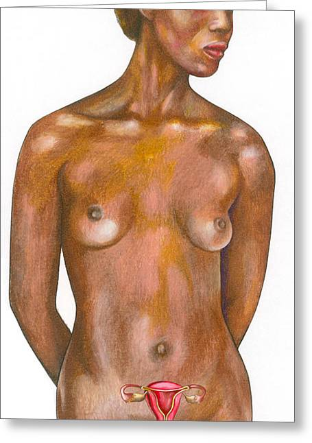 Female Body Greeting Cards - Uterus And Reproductive Organs Greeting Card by Gwen Shockey