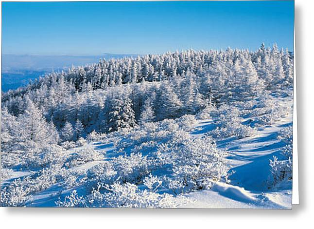 Snow Drifts Greeting Cards - Utsukushigahara Nagano Japan Greeting Card by Panoramic Images