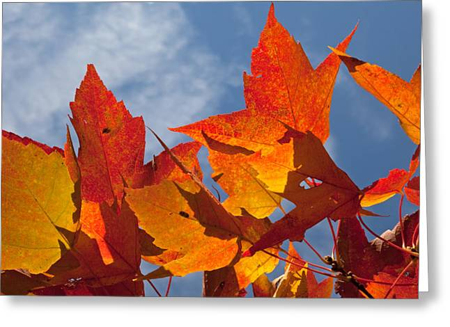 Natural Focal Point Photography Greeting Cards - UW Arboretum Fall Colors Greeting Card by Natural Focal Point Photography