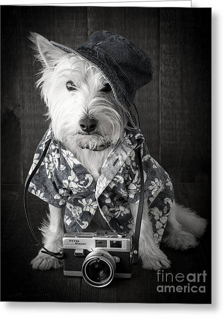 West Highland Greeting Cards - Vacation Dog with camera and Hawaiian shirt Greeting Card by Edward Fielding