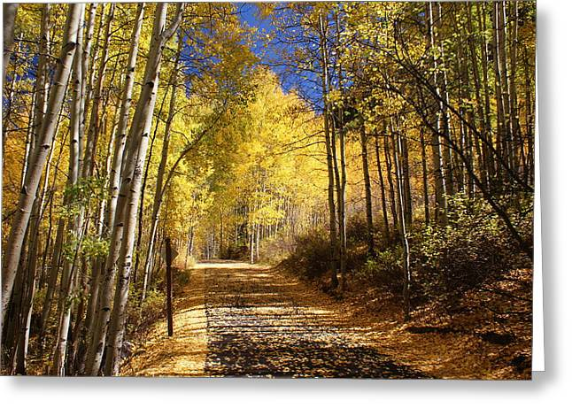 Scenic Greeting Cards - Vail Colorado Fall Bike path Greeting Card by Michael J Bauer
