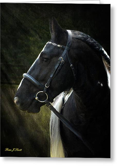 Horse Prints Greeting Cards - Val Headshot Greeting Card by Fran J Scott