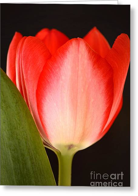 Springy Greeting Cards - Valentine Greeting Card by Deb Halloran