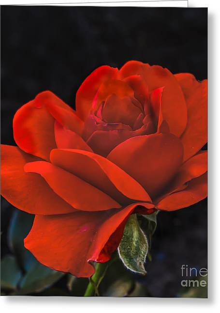 Haybales Greeting Cards - Valentine Rose Greeting Card by Robert Bales