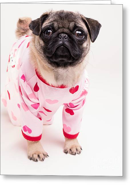 Pajamas Greeting Cards - Valentines Day - Adorable Pug Puppy in Pajamas Greeting Card by Edward Fielding