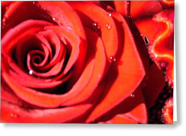Best Flower Images Greeting Cards - Valentines Greeting Card by Sarah OToole
