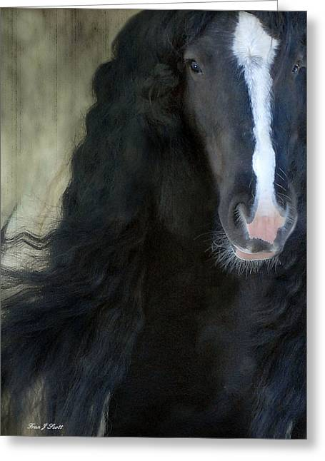 Gypsy Greeting Cards - Valentino Dreams Greeting Card by Fran J Scott