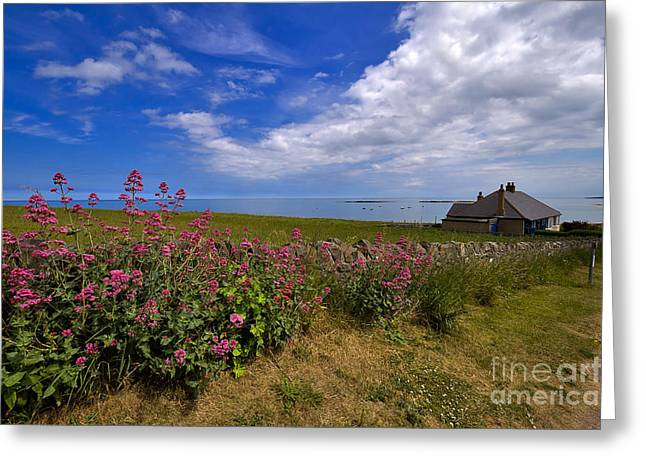 Peaceful Scene Greeting Cards - Valerian by a stone wall on the Northumberland Coast Greeting Card by Louise Heusinkveld