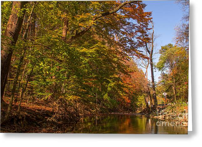 Reflections Of Trees In River Photographs Greeting Cards - Valley Creek Greeting Card by Rima Biswas