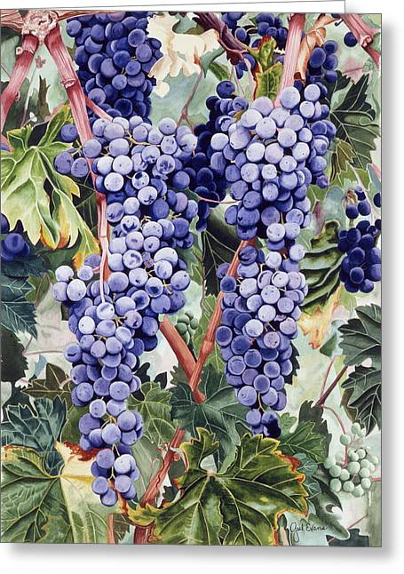 Valley Vines Greeting Card by Gael Graysen