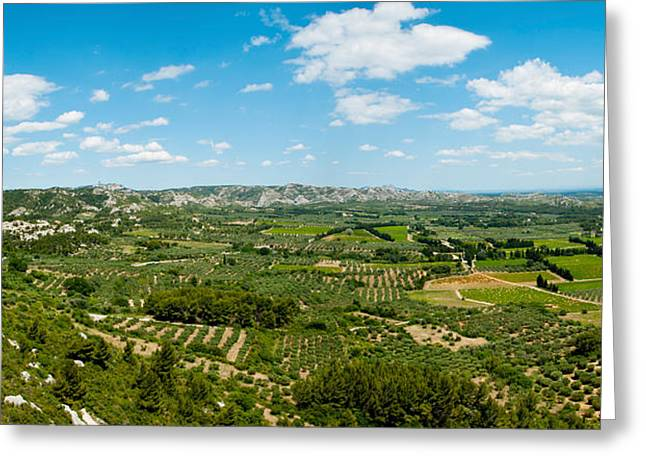 Olive Greeting Cards - Valley With Olive Trees And Limestone Greeting Card by Panoramic Images
