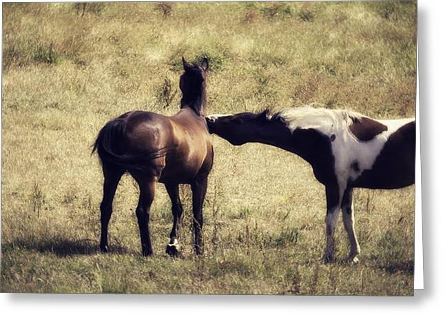 Old Western Photos Greeting Cards - Vanilla Kiss Greeting Card by Jacque The Muse