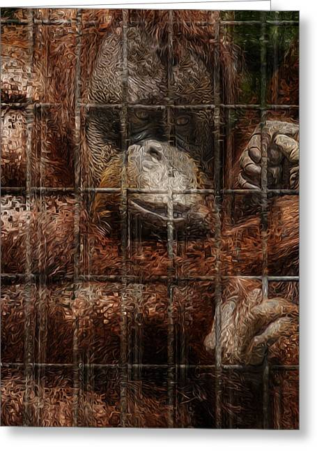 Orangutans Greeting Cards - Vanishing Cage Greeting Card by Jack Zulli