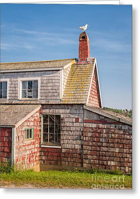 Vanishing Maine Greeting Card by Scott Thorp
