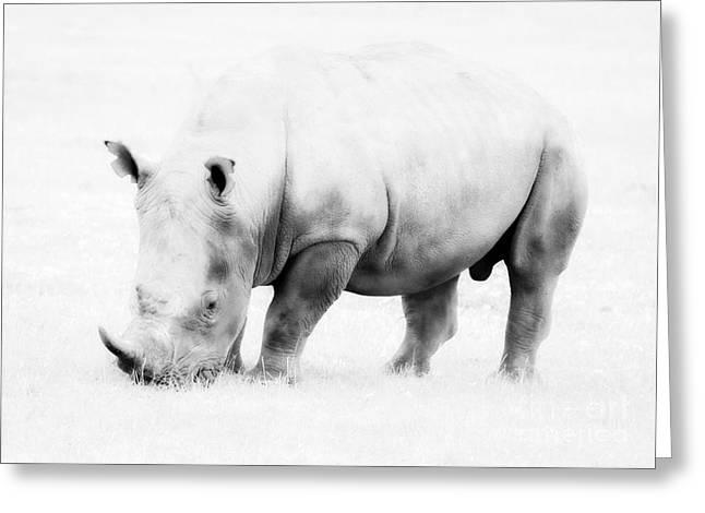 Rhinoceros Greeting Cards - Vanishing Species Greeting Card by Chris Scroggins