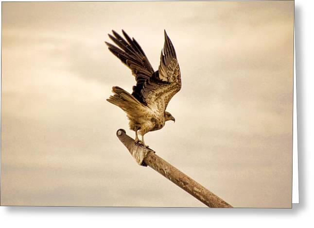 Kites Greeting Cards - Vantage Point V11 Greeting Card by Douglas Barnard
