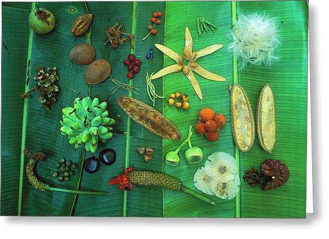 Differences Greeting Cards - Variety Of Seeds And Fruits Greeting Card by Christian Ziegler