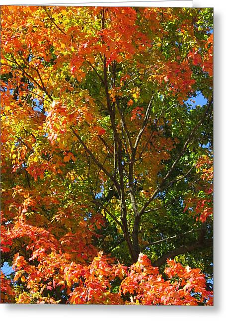 Guy Ricketts Photography Greeting Cards - Various Colors Sharing a Tree Greeting Card by Guy Ricketts