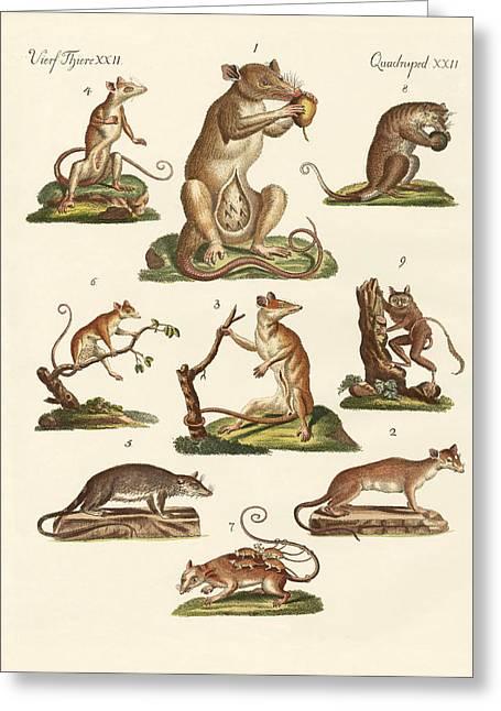 Marsupial Greeting Cards - Various kinds of marsupials Greeting Card by Splendid Art Prints