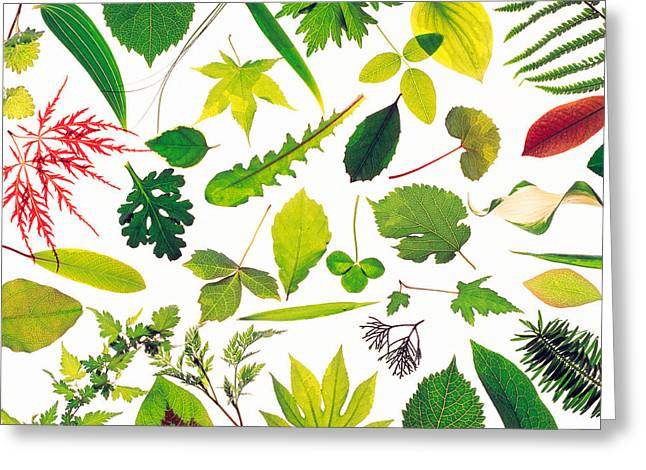 Generate Life Greeting Cards - Various Leaves On White Background Greeting Card by Panoramic Images
