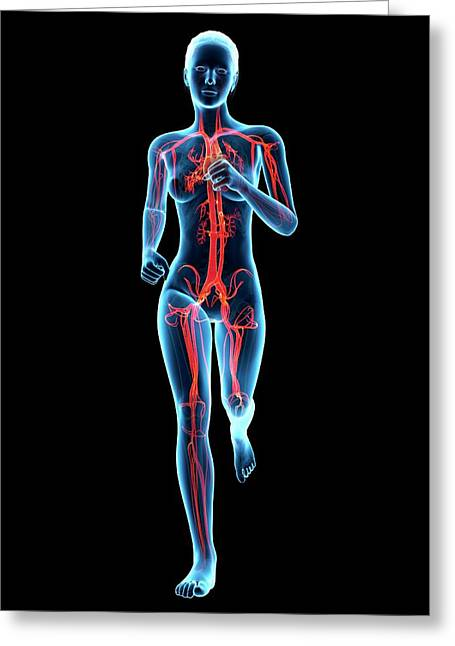 Vascular System Of A Runner Greeting Card by Sebastian Kaulitzki