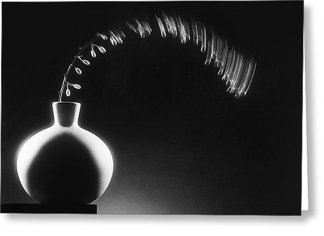 Vase and berries Greeting Card by Tony Cordoza