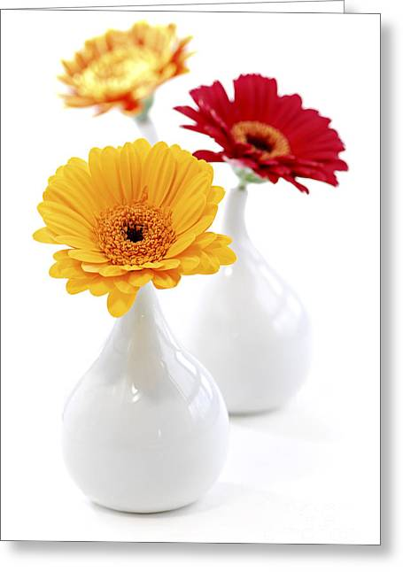 Yellow Flowers Greeting Cards - Vases with Gerbera flowers Greeting Card by Elena Elisseeva