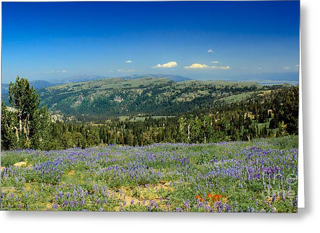 Haybale Greeting Cards - Vast View And Lupine Greeting Card by Robert Bales