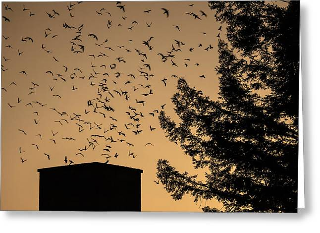Flocks Of Ducks Greeting Cards - Vauxs Swifts in migration Greeting Card by Garry Gay