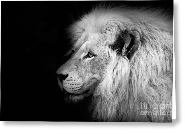 Vegas Greeting Cards - Vegas Lion - Black and White Greeting Card by Ian Monk