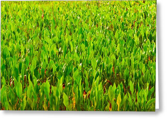 Florida Flower Greeting Cards - Vegetation, Boynton Beach, Florida, Usa Greeting Card by Panoramic Images