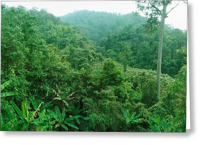 Mai Greeting Cards - Vegetation In A Forest, Chiang Mai Greeting Card by Panoramic Images
