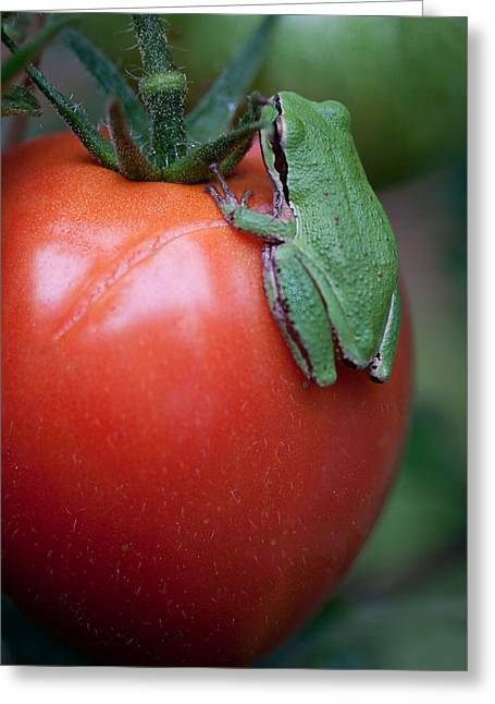Pacific Tree Frog Greeting Cards - Veggie Lover Greeting Card by Marvin Mast