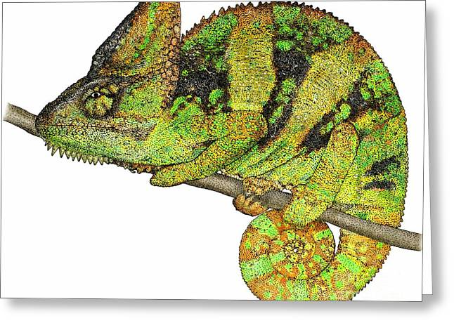 Lizard Illustration Greeting Cards - Veiled Chameleon Greeting Card by Roger Hall