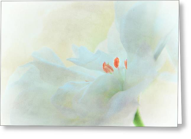 Stamen Greeting Cards - Veiled Greeting Card by Constance Fein Harding