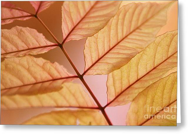 Uc Davis Photographs Greeting Cards - Veins Greeting Card by Andrew Brooks