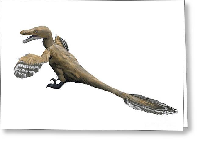 Velociraptor Greeting Cards - Velociraptor Mongoliensis, Late Greeting Card by Nobumichi Tamura