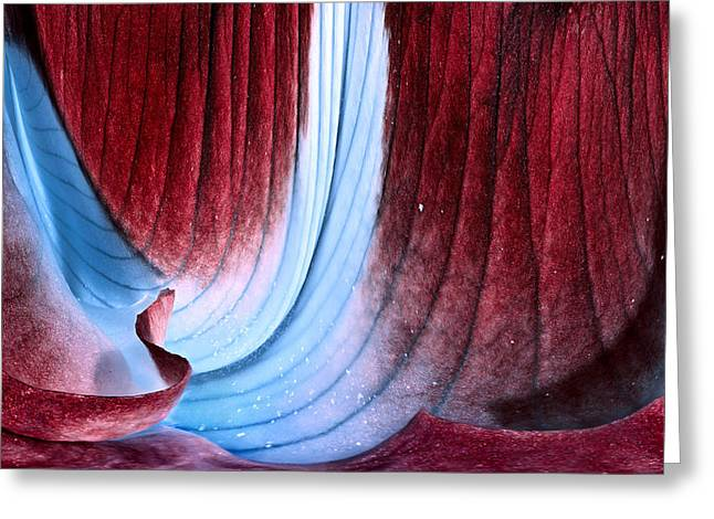 Russ Brown Greeting Cards - Velvet Cave Greeting Card by Russ Brown